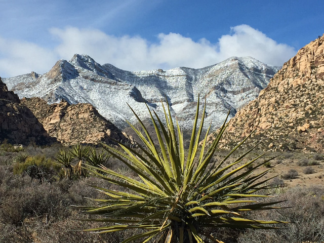A Mojave yucca graces Red Rock Canyon in front of snow-dusted mountains on Christmas Day, Sunday, Dec. 25, 2016, about 17 miles west of Las Vegas. Keith Rogers/Las Vegas Review-Journal