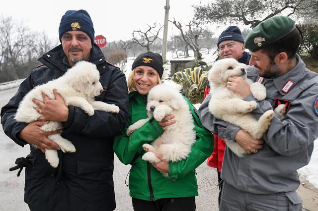 Rescuers hold three puppies that were found alive in the rubble of the avalanche-hit Hotel Rigopiano, near Farindola, central Italy, Monday, Jan. 22, 2017.  (Alessandro Di Meo/ANSA via AP)