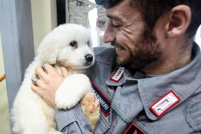 A Carabinieri (Italian paramilitary police) officer officer holds one of three puppies that were found alive in the rubble of the avalanche-hit Hotel Rigopiano, near Farindola, central Italy, Mond ...