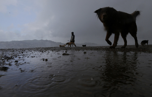 Dogwalker Vincent Flores walks along Bernal Heights Hill in San Francisco, Monday, Jan. 23, 2017. The tail end of a punishing winter storm system lashed California with thunderstorms and severe wi ...