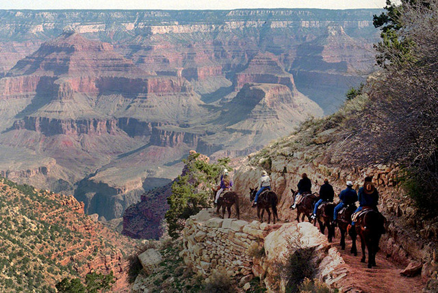 A mule train winds its way down the Bright Angel trail at Grand Canyon National Park, Ariz., in 1996. (AP Photo/Jeff Robbins, File)