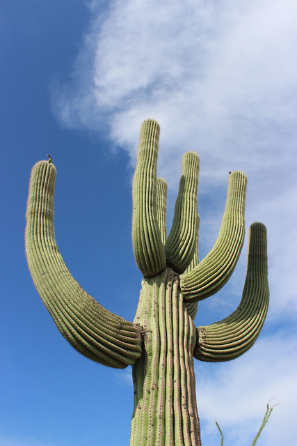 The park is home to 28 cactus species including the giant saguaro. (Deborah Wall/Courtesy)