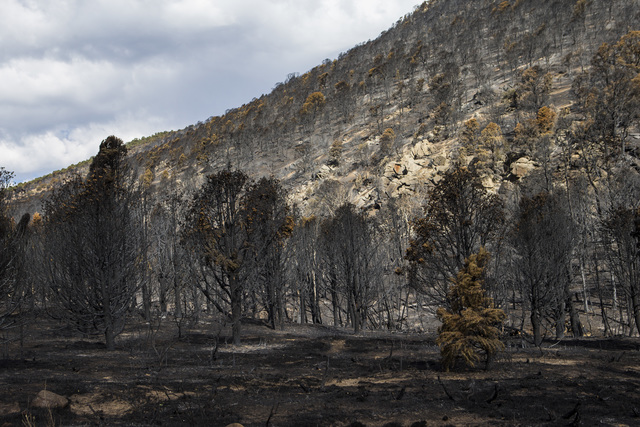 Damage from the Strawberry Fire is shown at Great Basin National Park on Thursday, Aug. 25, 2016. (Chase Stevens/Las Vegas Review-Journal) @csstevensphoto