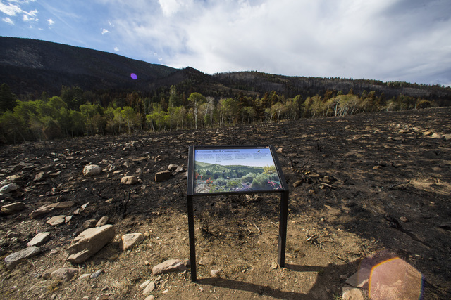 An informational sign is surrounded by damage from the Strawberry Fire at Great Basin National Park on Thursday, Aug. 25, 2016. (Chase Stevens/Las Vegas Review-Journal) @csstevensphoto