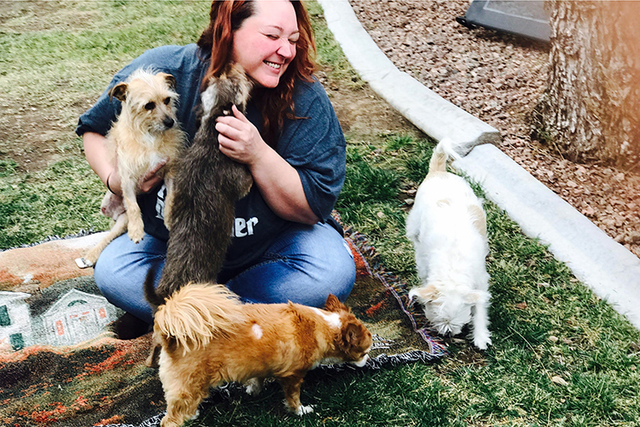 Cherie Scarbrough is surrounded by dogs Feb. 20, 2017. When she started her small dog rescue, Anchors Up, based near Summerlin, she had no idea New Year's would bring her a case that tore at her ...