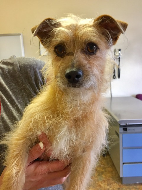 Marcus, who was hit by a car on New Year's Day, is seen before the operation to remove his back leg. He was rescued by Anchors Up, a new dog rescue group that takes in medically-fragile terrier ty ...
