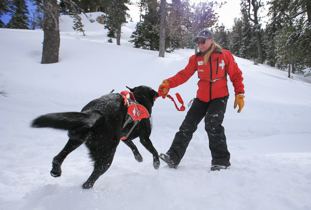 Ski Patrol Manager Michelle French, 56, plays with nearly 2-year-old avalanche rescue dog Lida during a training exercise at Lee Canyon ski resort on Mount Charleston on Thursday, Feb. 23, 2017, i ...
