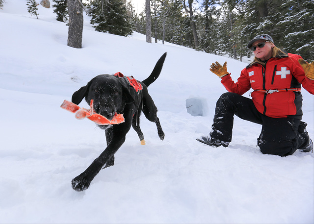 Ski Patrol Manager Michelle French, 56, plays with nearly 2-year-old rescue dog Lida during a training exercise at Lee Canyon ski resort on Mount Charleston on Thursday, Feb. 23, 2017, in Las Vega ...
