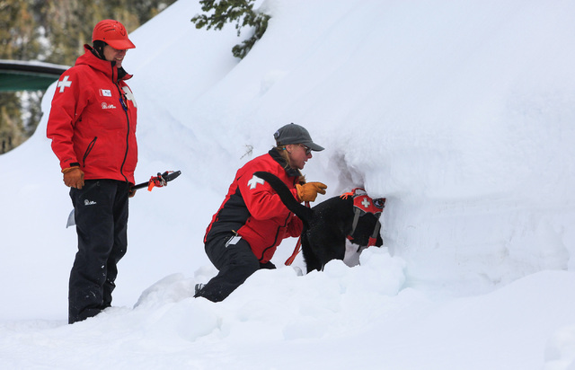 Ski Patrol Manager Michelle French, 56, center helps avalanche rescue dog Lida dig into a snowbank where skier Nick Nordblom is buried during a training exercise at Lee Canyon ski resort on Mount  ...