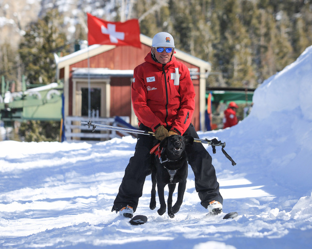 Snow Safety Manager Greg French, 52, skis with 11-month-old avalanche rescue dog Carson during a training exercise at Lee Canyon ski resort on Mount Charleston on Thursday, Feb. 23, 2017, in Las V ...