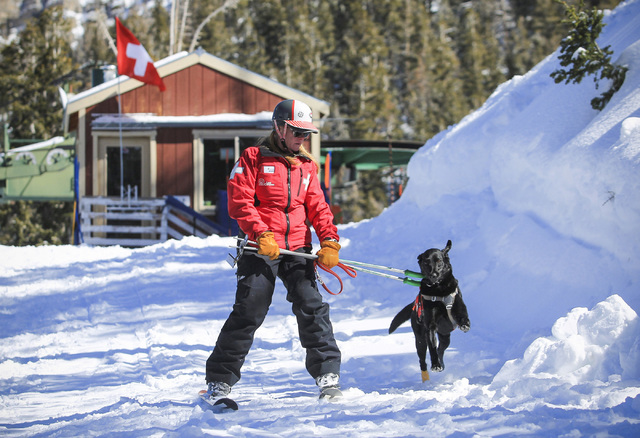 Ski Patrol Manager Michelle French, 56, skis with nearly 2-year-old rescue dog Lida after a training exercise at Lee Canyon ski resort on Mount Charleston on Thursday, Feb. 23, 2017, in Las Vegas. ...