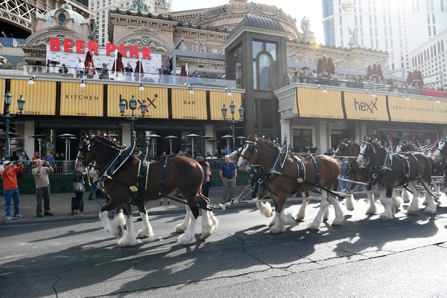 The Budweiser Clydesdales trot to Beer Park at Paris Las Vegas on Sunday, Feb. 5, 2017. (Denise Truscello/WireImage)