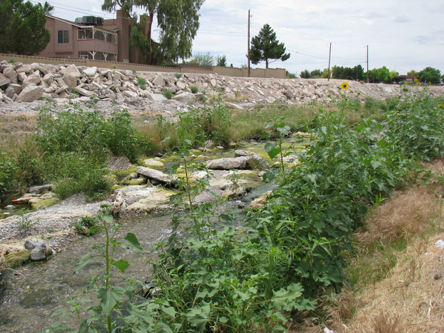 The Flamingo Wash was messy and could be dangerous but it was also a green space in an urban environment as seen in this June 3, 2009 photo. This section of the wash is now a concrete channel. (F. ...