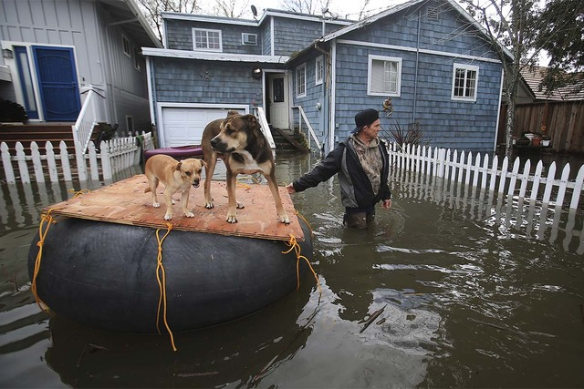 James Fipps takes his dogs for a walk on a makeshift raft as Clear Lake continues to inundate homes with flooding, Tuesday Feb. 21, 2017, in Lakeport, California. (Kent Porter/The Press Democrat v ...