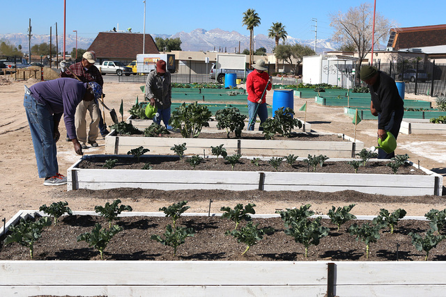 Volunteers, including Charlie Blake, 73, left,  James Johnson, 80, second left, and Harry Dodd, right, work at Zion Choice Neighborhood Community Garden on Wednesday, Feb. 1, 2017, in North Las Ve ...