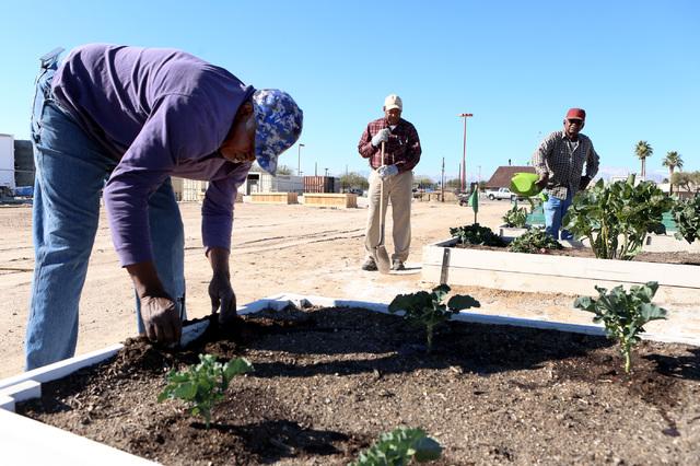 Charlie Blake, 73, repairs irrigation system at Zion Choice Neighborhood Community Garden on Wednesday, Feb. 1, 2017, in North Las Vegas. (Bizuayehu Tesfaye/Las Vegas Review-Journal) @bizutesfaye