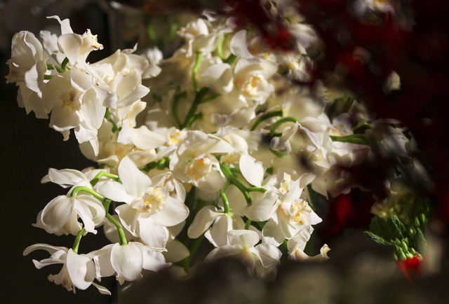 White orchids by Mark's Garden during a media preview for the 89th Academy Awards' Governors Ball in Hollywood, Calif. on Thursday, Feb. 16, 2017. (Chase Stevens/Las Vegas Review-Journal) @cssteve ...
