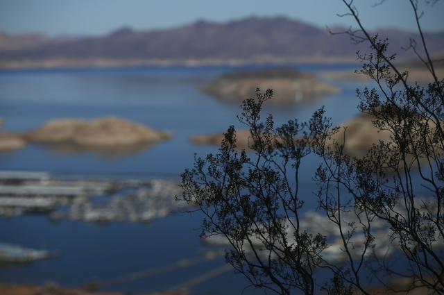 Foliage along the Historic Railroad Trail at Lake Mead National Recreation Area on Tuesday, Feb. 14, 2017. (Chase Stevens/Las Vegas Review-Journal) @csstevensphoto