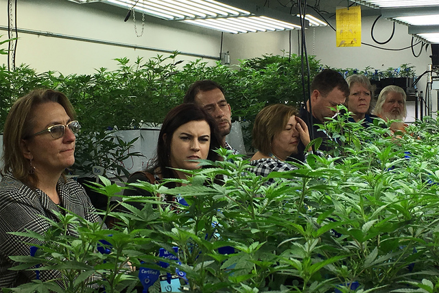 Agriculture regulators from seven states and Guam tour a Denver marijuana growing warehouse on a tour organized by the Colorado Department of Agriculture in Denver. (Kristen Wyatt/AP)