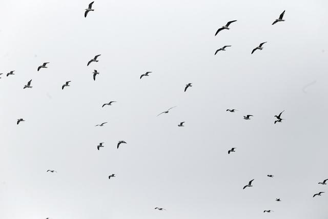 Birds fly over the waste at the Apex Regional Landfill on Friday, Jan. 20, 2017, in Las Vegas. (Christian K. Lee/Las Vegas Review-Journal) @chrisklee_jpeg