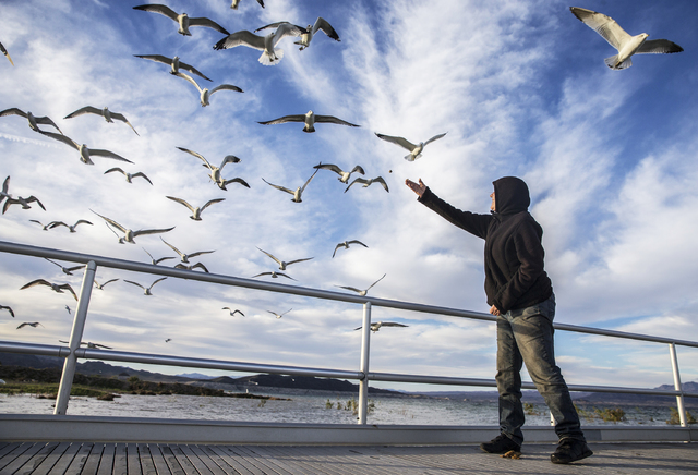"""Ann Pippin feeds a flock of seagulls on the shores of Lake Mead on Tuesday, Feb 21, 2017, at Lake Mead Recreational Area, in Boulder City. """"It's so quiet and peaceful out here,""""  ..."""
