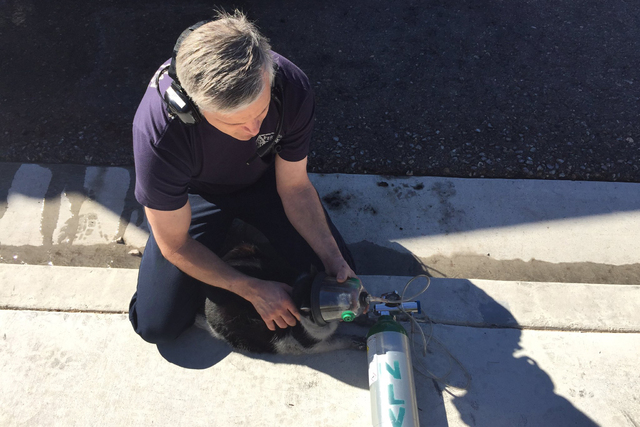 A North Las Vegas firefighter tends to a pet cat after a fire at single-family home at 5238 Ferrell Street on Friday, Feb. 24. (@NLVFirePIO/Twitter)