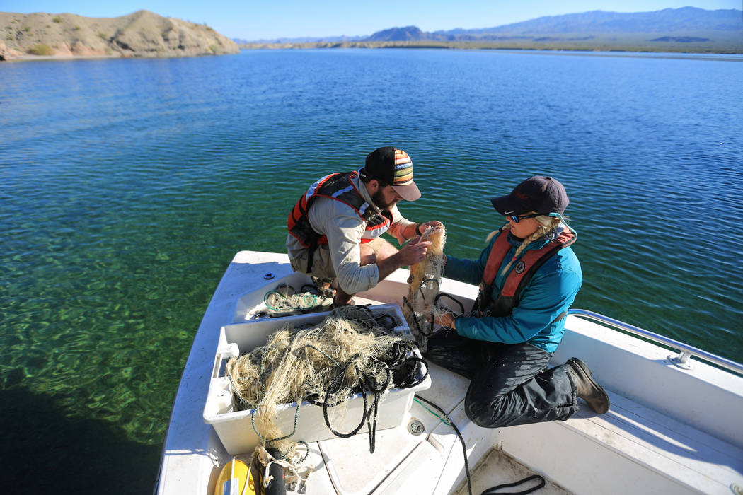 Taylor Senegal, 25, left, an aquatic invasive species research associate for the Great Basin Institute and Julia Mueller, 28, fishery biologist for the Lake Mead National Recreation area, right, u ...
