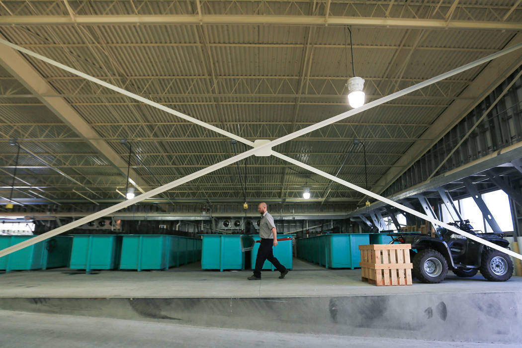 Nevada Department of Wildlife hatchery technician Chris Burg walks beside fish tanks while getting ready for a shipment of razorback sucker fish at the Lake Mead Fish Hatchery in Las Vegas Friday, ...
