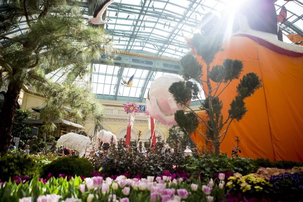 Bellagio Conservatory Transformed Into Japanese Tea Garden For Spring Photos Las Vegas