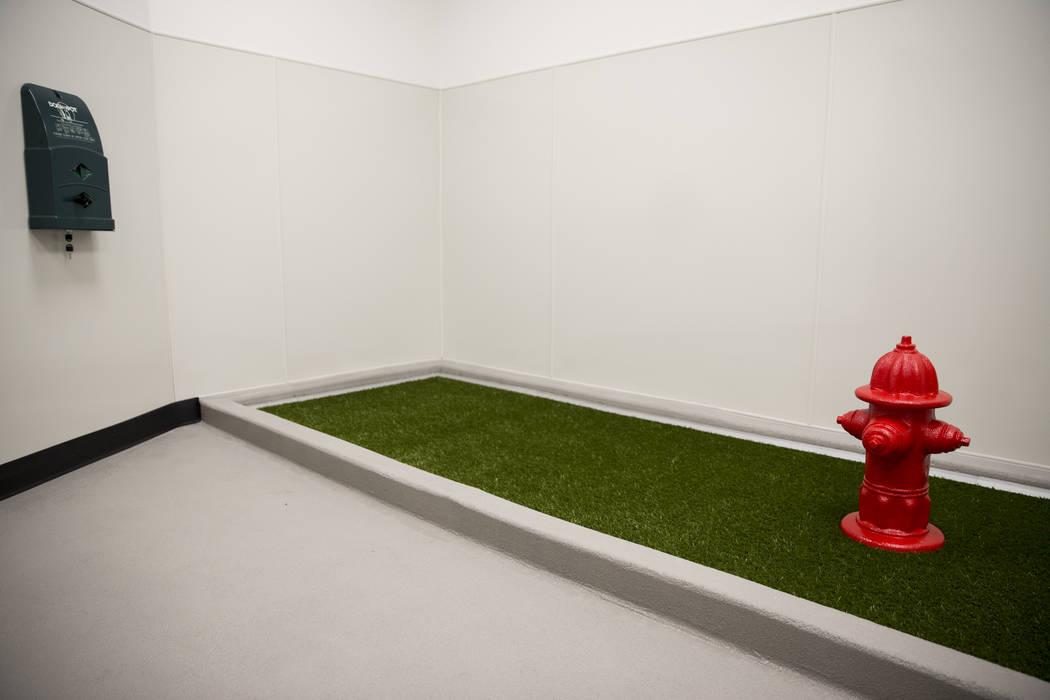 The newly opened indoor pet relief room at McCarran International Airport Terminal 1 on Thursday, March 16, 2017, in Las Vegas. (Erik Verduzco/Las Vegas Review-Journal) @Erik_Verduzco