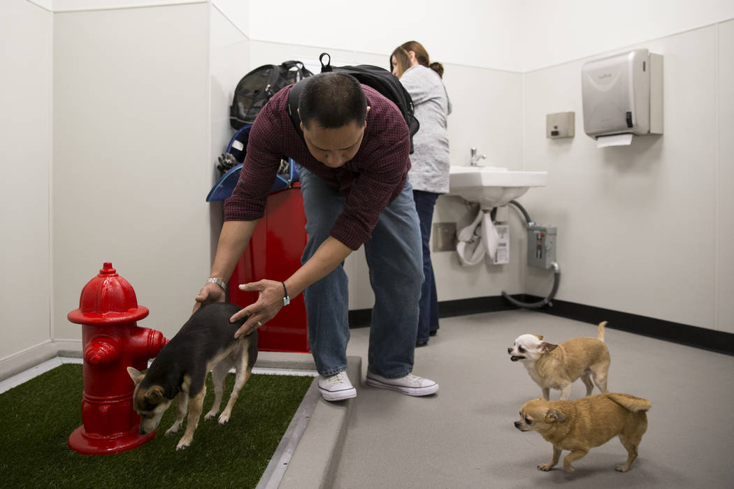 Joseph Rasalan with his three pet chihuahuas inside the newly opened indoor pet relief room at McCarran International Airport Terminal 1 on Thursday, March 16, 2017, in Las Vegas. (Erik Verduzco/L ...