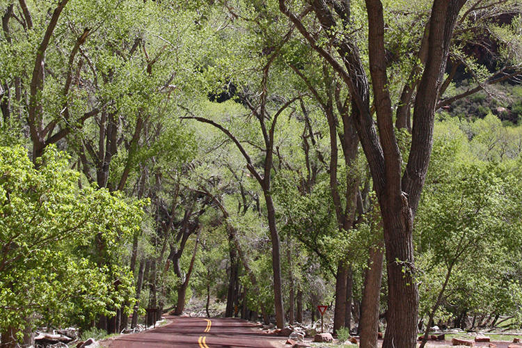 Zion Canyon Drive, in Zion National Park in early spring. (Deborah Wall/Courtesy)