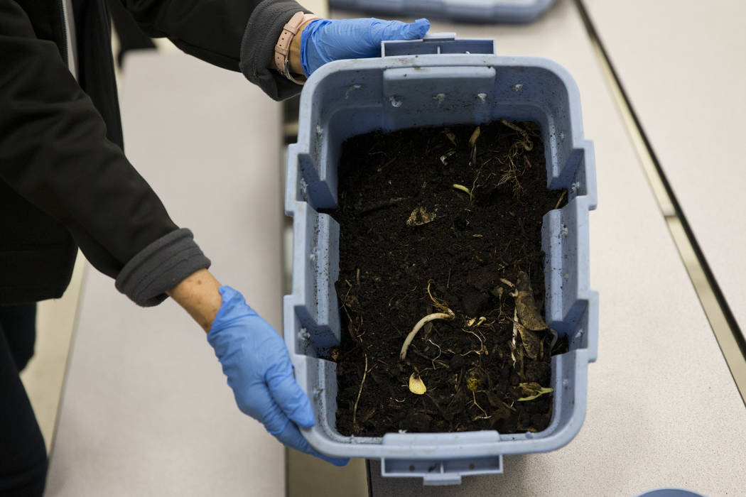Bev Patton, program manager for Green Our Planet, handles compost during a worm composting class for local teachers at Lake Elementary School on Saturday, March 25, 2017, in Las Vegas. (Erik Verdu ...