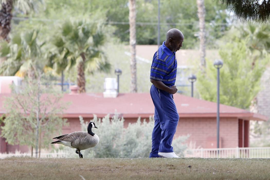 A man, who refused to give his name, walks along the pond at Potosi Park on Wednesday, March 29, 2019, in Las Vegas. (Bizuayehu Tesfaye/Las Vegas Review-Journal) @bizutesfaye