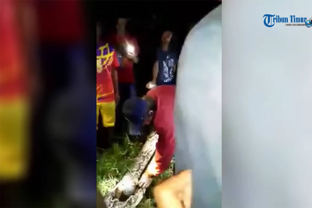 This image from video shows a man cutting into a reticulated python to reveal an Indonesian man the snake had swallowed. (Tribun Timur/YouTube)