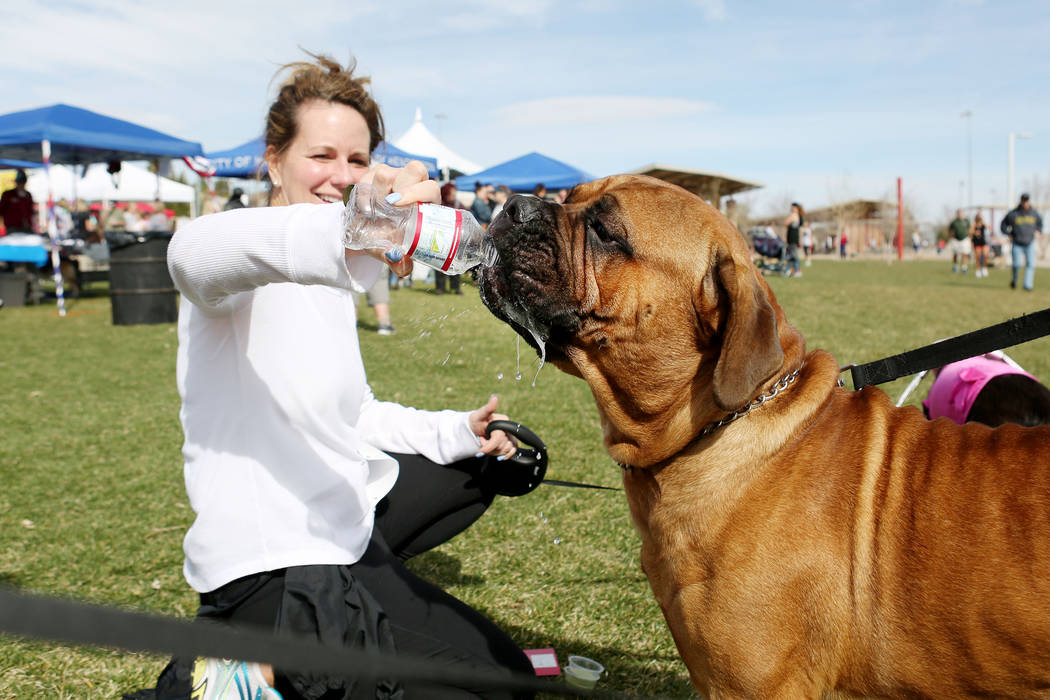Heather Clifford, gives a water battle to Clifford, a bullmastiff, after running in the Rover Run 5K, a part of Bark In the Park, an event to celebrate dogs, at Cornerstone Park in Henderson on Sa ...