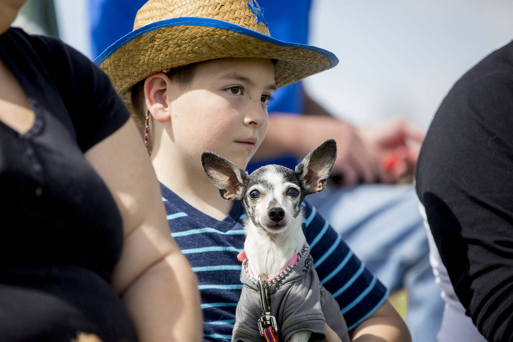 Mikey Rehill, 8, holds his miniature rat terrier, Lola, while watching a frisbee catching contest during Bark In the Park, an event to celebrate dogs, at Cornerstone Park in Henderson on Saturday, ...