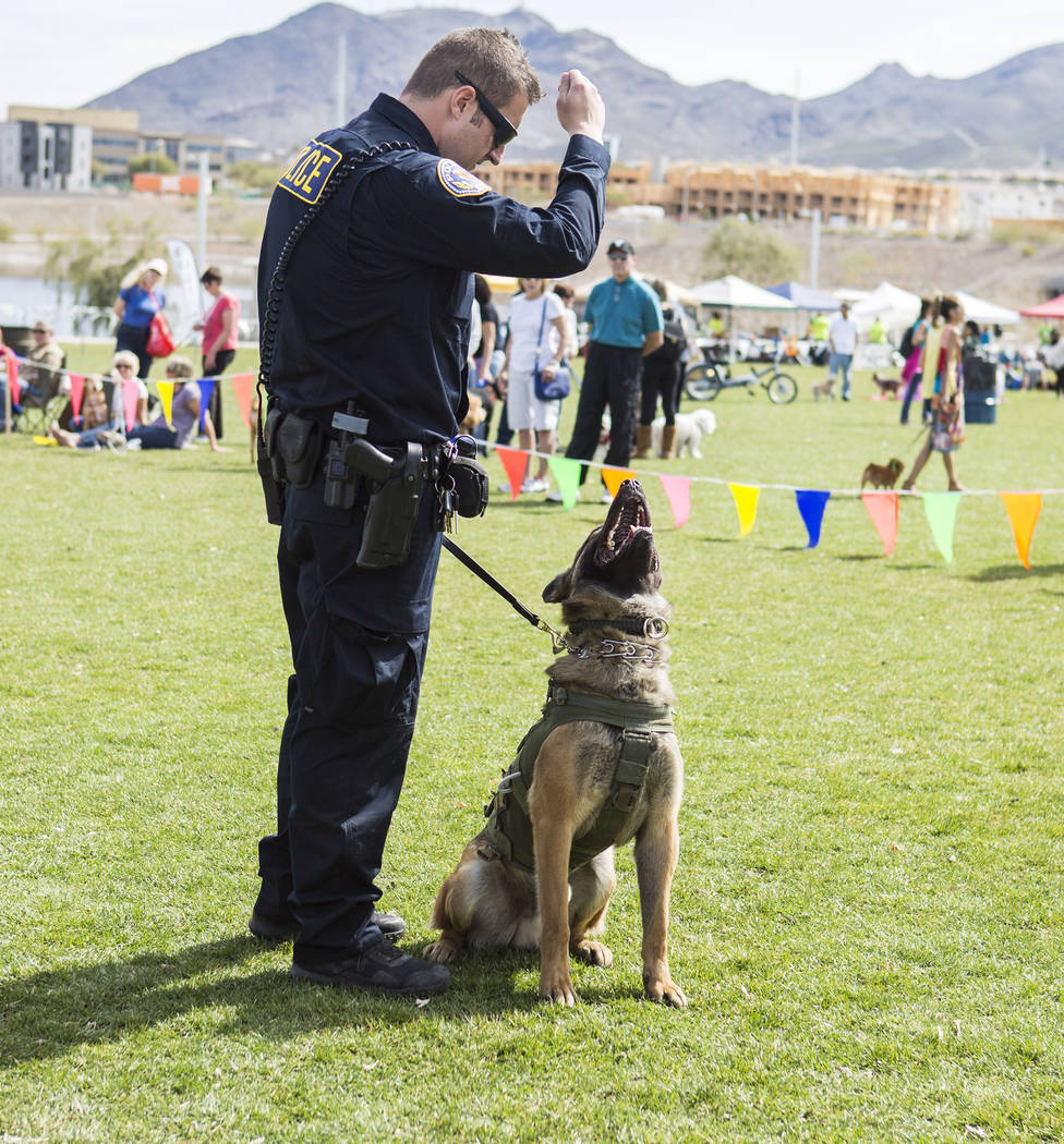 Officer Matthew Doleshal directs his K9 unit dog, Jano, a Belgian Malinois, during a Henderson K9 police unit demonstration of the dogs on their team during Bark In the Park, an event to celebrate ...