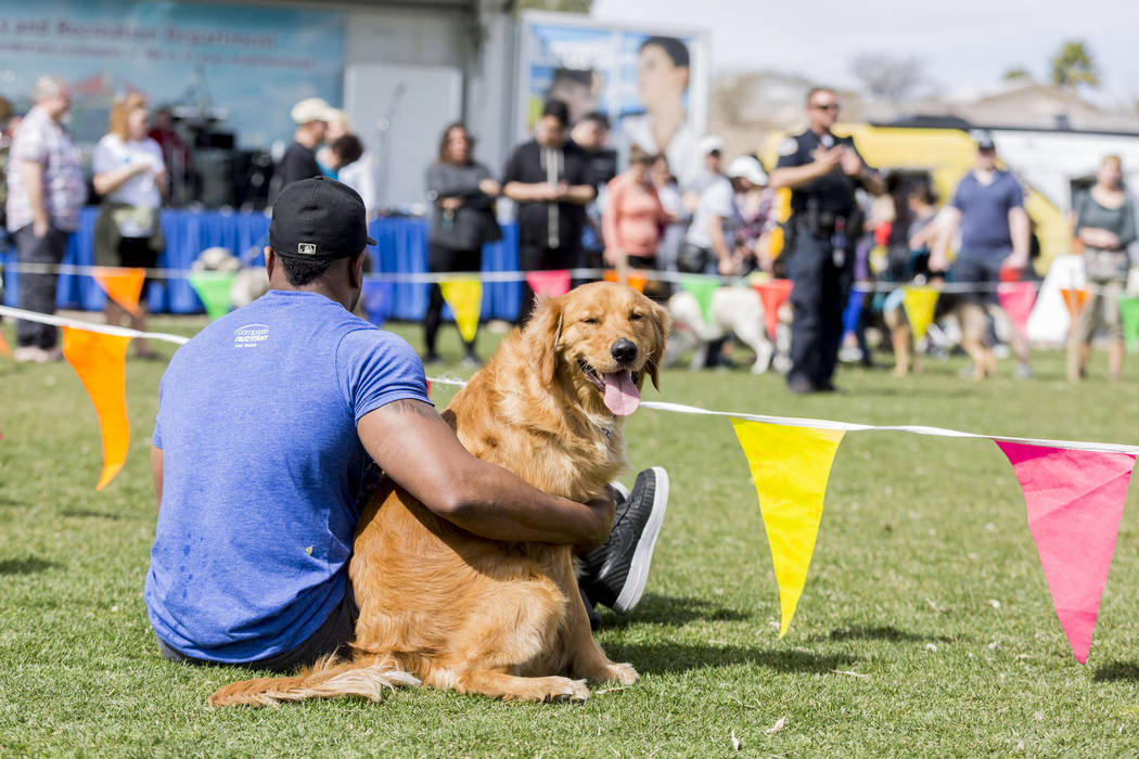 Chit, a male Golden Retriever sits with his owner as he watches a Henderson K9 police unit give information on  the dogs on their team apart of Bark In the Park, an event to celebrate dogs at Corn ...