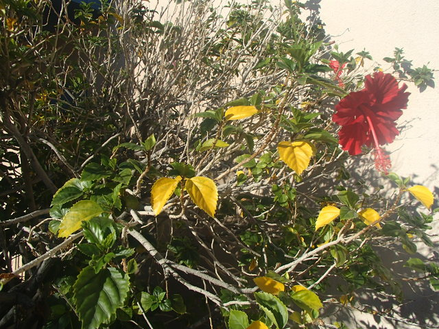 Its Not Too Late To Fertilize Fruit Trees Las Vegas Review Journal