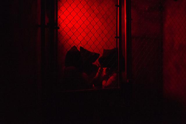 The Basement Escape Room Vegas
