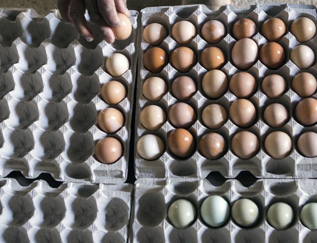 Farmhand Ernesto Jimenez carts fresh organic eggs in Amargosa Valley on Tuesday, Nov. 22, 2016. Jeff Scheid/Las Vegas Review-Journal Follow @jeffscheid