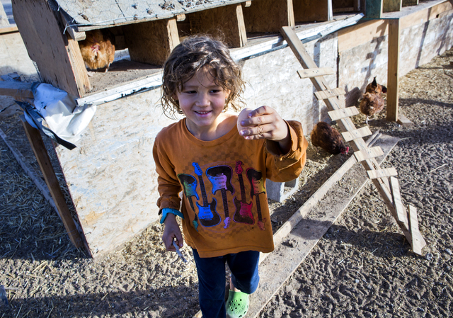 Meyer DeLee, 5, holds an egg at the T &T Ranch in  Amargosa Valley on Tuesday, Nov. 22, 2016. The family is raising organic free range egg laying chickens. Jeff Scheid/Las Vegas Review-Journal ...