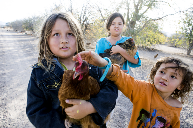 Mason DeLee, 7, and sister May Lee DeLee, 9, holds chickens while brother Meyer DeLee,5, pets one in Amargosa Valley on Tuesday, Nov. 22, 2016. The family is raising organic free range egg laying  ...