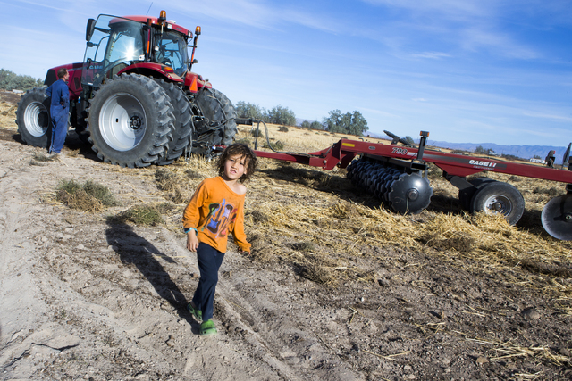 Meyer DeLee, 5, stands beside a tractor at the family's T&T Ranch in Amargosa Valley on Tuesday, Nov. 22, 2016. The grain is used to feed organic free range egg laying chickens. Jeff Scheid/La ...