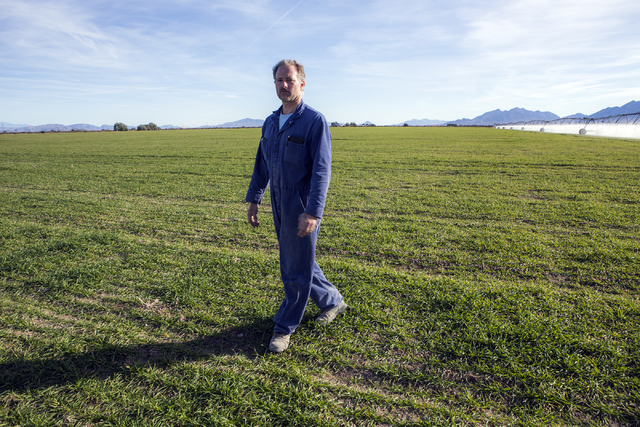 Michael DeLee, owner of T&T Ranch, walks on a field of  triticale, a hybrid of rye and wheat grain, in Amargosa Valley on Tuesday, Nov. 22, 2016. The grain is used to feed organic free range e ...