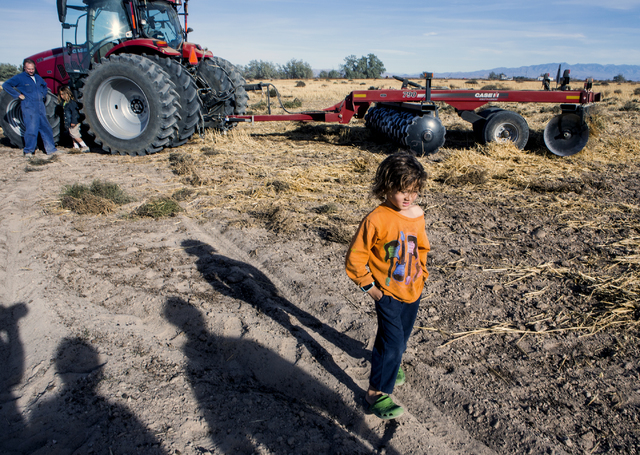 Meyer DeLee, 5, stands beside a tractor at the family's T&T Ranch in Amargosa Valley on Tuesday, Nov. 22, 2016. The grain is used to feed free range organic egg laying chickens.Jeff Scheid/Las ...
