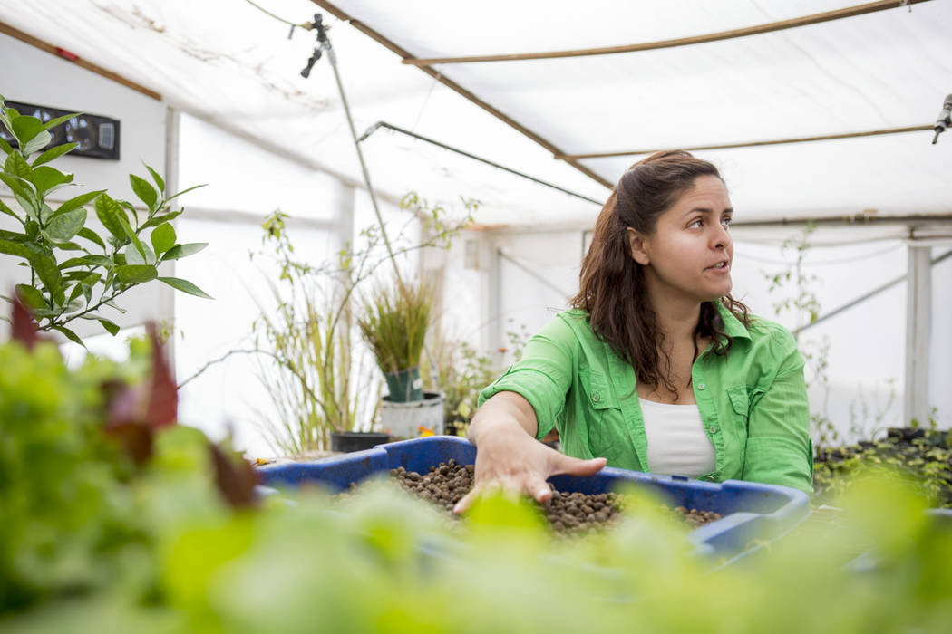 CFO of Desert Bloom Eco Farm  Claudia Andracki explains ways to pot their plants in the farm's greenhouse in Tecopa, Calif. Thursday, March 23, 2017. (Elizabeth Brumley/Las Vegas Review-Journal) @ ...