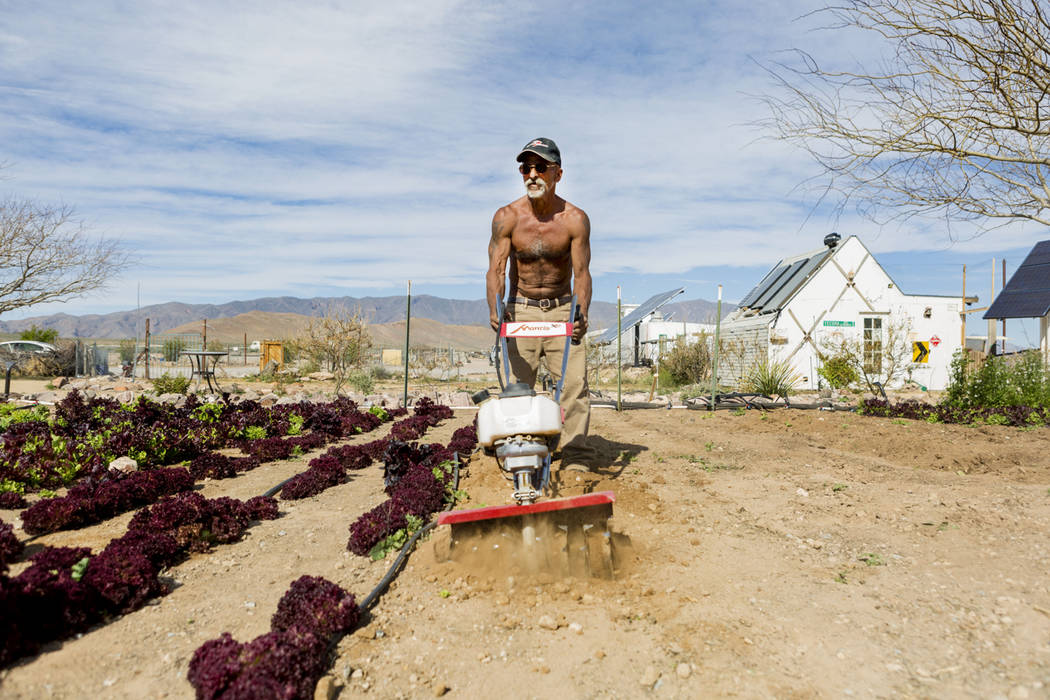Desert Bloom Eco Farm laborer Raul Portal tills the ground  in Tecopa, Calif. Thursday, March 23, 2017. (Elizabeth Brumley/Las Vegas Review-Journal) @EliPagePhoto