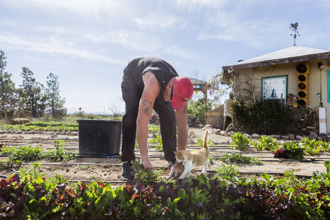 Desert Bloom Eco Farm laborer Tim Manka pulls weeds at the farm in Tecopa, Calif. Thursday, March 23, 2017. (Elizabeth Brumley/Las Vegas Review-Journal) @EliPagePhoto